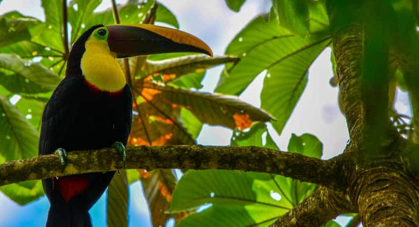 Costa Rica Jaco Tours, Costa Rica Jaco Nature and Waterfall tours, Nature & Waterfall Tours Jaco, Jaco Costa Rica