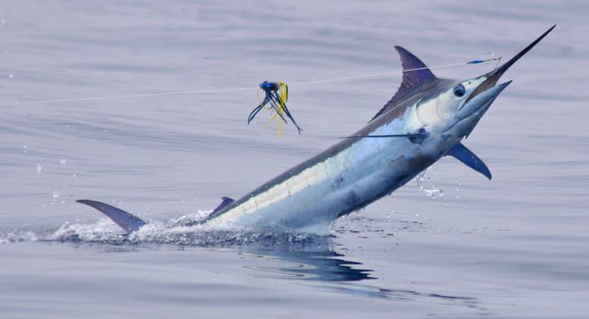 Fishing Carters Jaco, Fishing Costa Rica, Sport Fishing Costa Rica, Rooster Fishing, Sailfish Fishing, Marlin Fishing