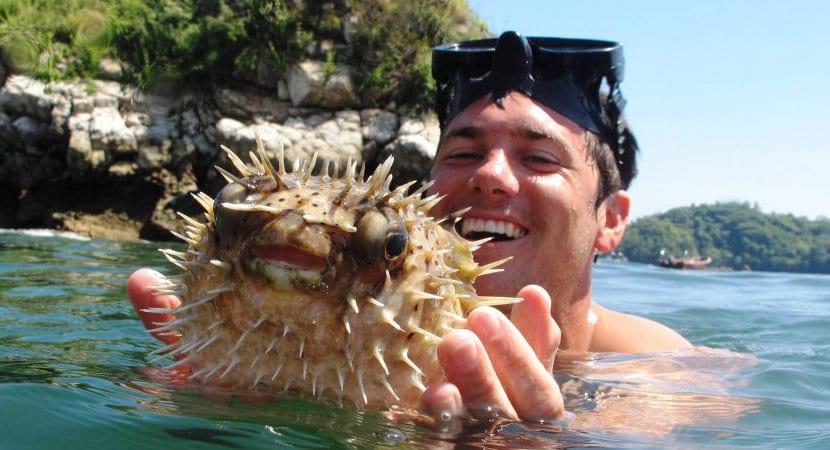 Tortuga Island Costa Rica, Tortuga Island Jaco, Costa Cat