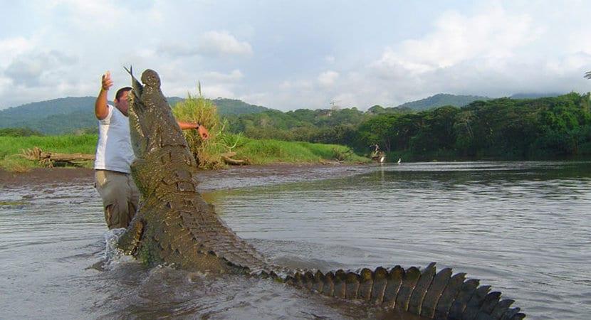 Costa Rica Crocodile Tour, Crocodile Tour Jaco, Crocodile Tour Costa Rica, Costa Rica Tours, Jaco Costa Rica, Adventure Tours Costa Rica, Costa Rica Tours Adventure, AXR Jaco, Tarcoles River,