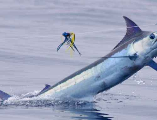 Guide to fishing in Costa Rica