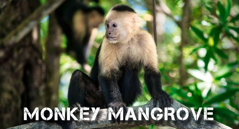 Monkey Mangrove Tour, Monkey Tour Costa Rica,