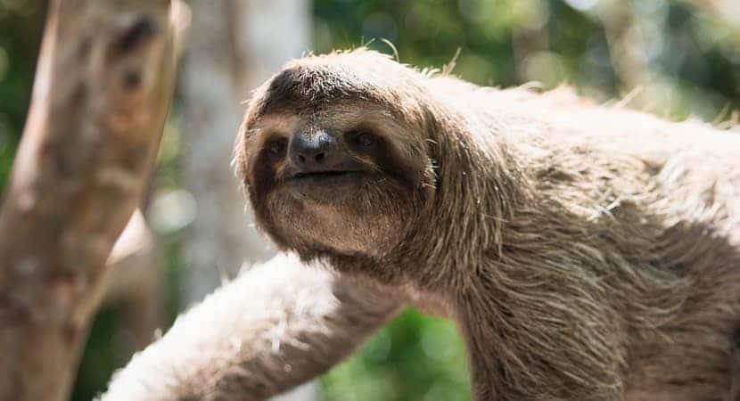 Monkey Tour Jaco Costa Rica, Costa Rica Tours, Jaco Beach, Costa Rica Monkey Tours, Adventure Tours Costa Rica, Costa Rica Adventure Tours, AXR Jaco,