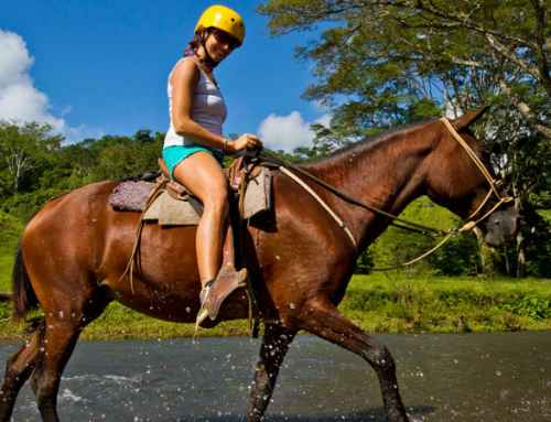 Benefits of Horseback Riding