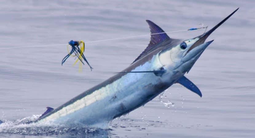 Fishing Charters from Los Sueños Marina Costa Rica