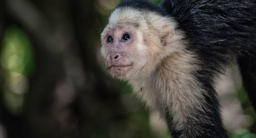 Monkey Mangrove Tour Jaco Costa Rica, Costa Rica Jaco Monkey Tour, Jaco Costa Rica